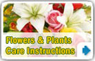 Flowers care tips